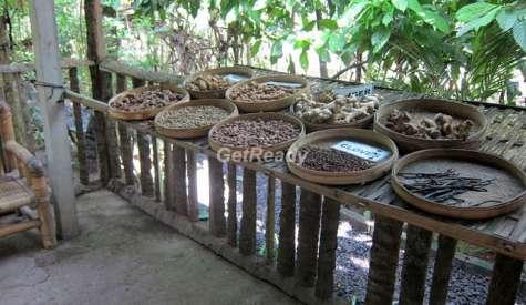 貓屎咖啡園.烏布.峇里島自由