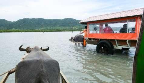 由布島.水牛車往返的日本小沙洲